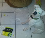 Dog training 101.jpg